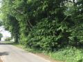 rechts der Wald