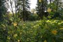 Rückansicht Garten
