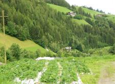 Geschlossener Hof in Lüsen - Südtirol