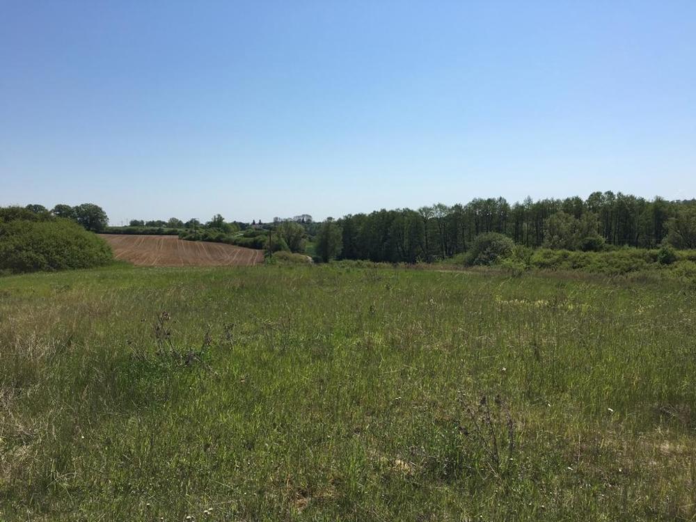 2. Landwirtschaftliche Fläche