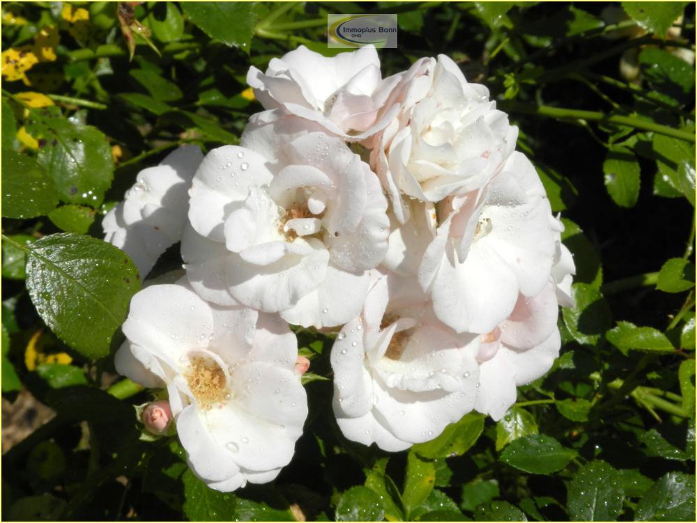 Blume aus dem Garten