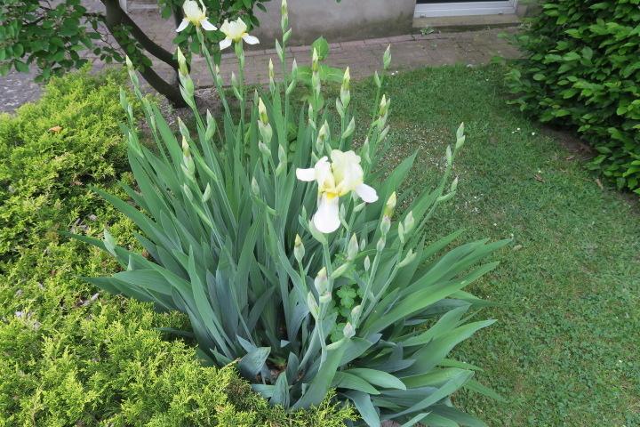 0404-Garten Detail