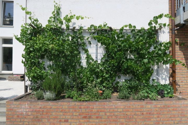 2719-Pflanzen