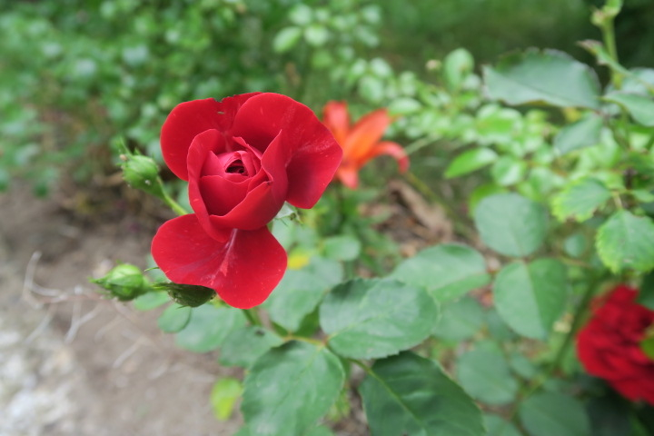 3233-weiterer Blumenbestand