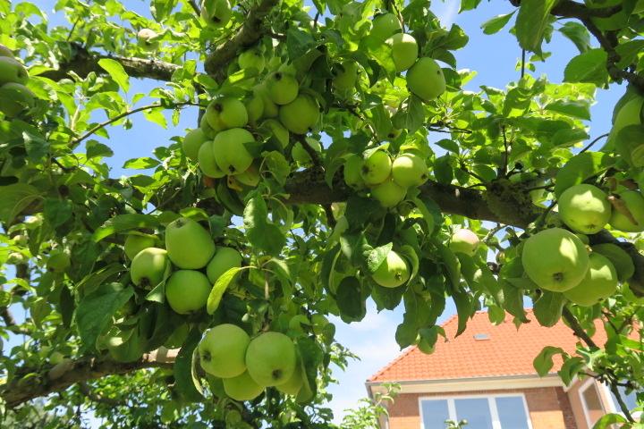 3290-Apfelbäume