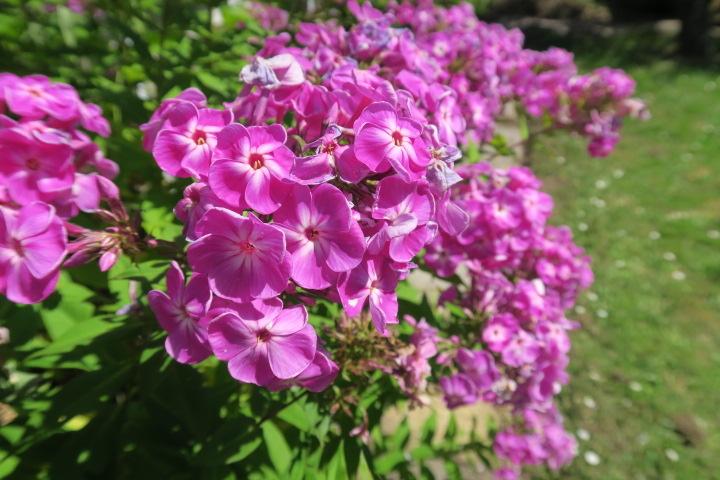 3290-Blumen weitere