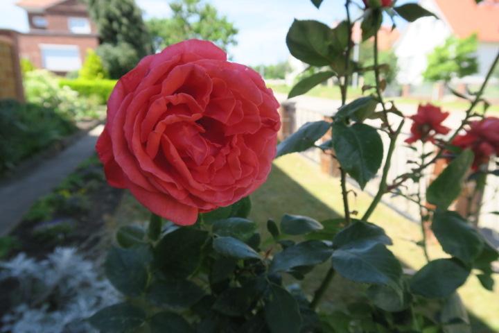 3290-Blumen