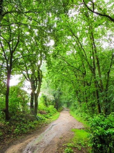 Landschaftsschutzgebiet im Sommer