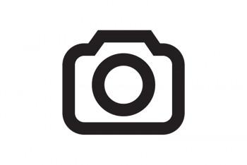 Teambild Alessa Immobilien