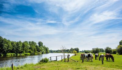 Grüne Wiese mit Pferden am Fluss