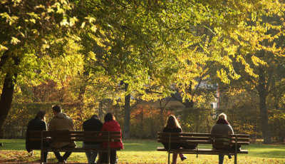 Menschen auf Parkbänken unter Baum