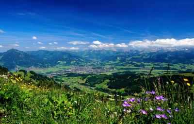 Blumenwiese im Gebirge in Bayern