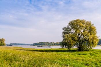Natur und Rhein in Dormagen
