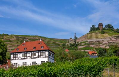 Weinberg mit Haus in Radebeul