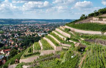 Weinberge in Radebeul