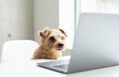Ein Hund am Laptop