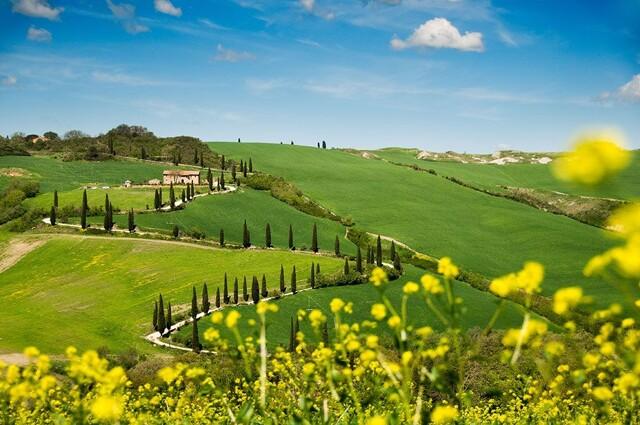 Wiesen, Blumen und Bäume in der Toskana